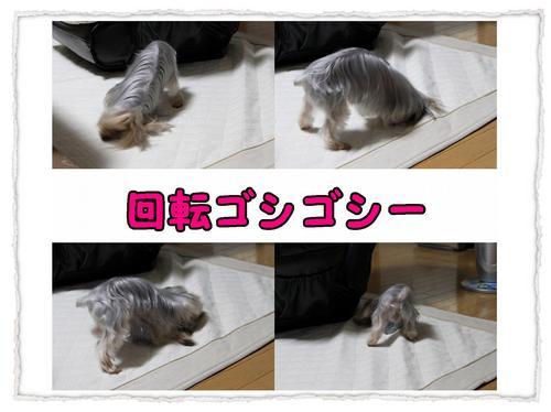 組写真 コピー1.JPG