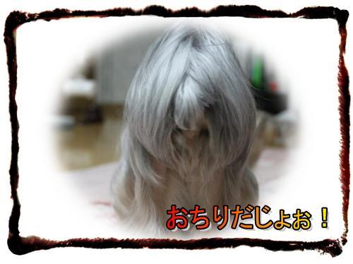 dc031901 コピー1.JPG