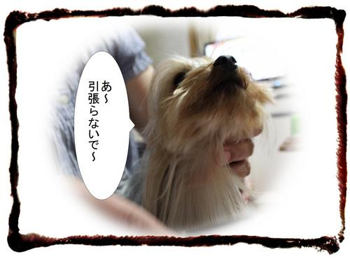 dc051504 コピー1.JPG