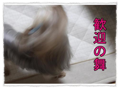 dc062501 コピー1.JPG