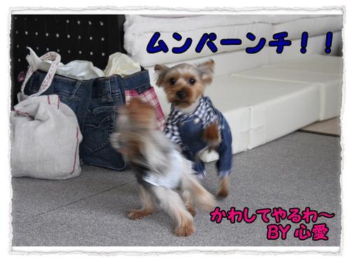 dc062605 コピー1.JPG