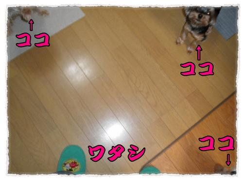 dc063001 コピー1.JPG