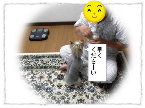dc070708 コピー1.JPG