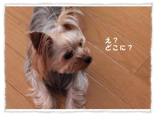 dc071604 コピー1.JPG