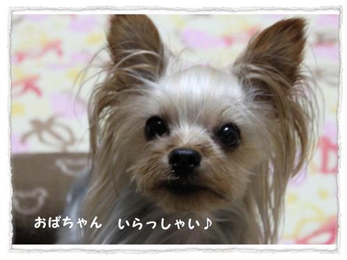 dc090108 コピー1.JPG