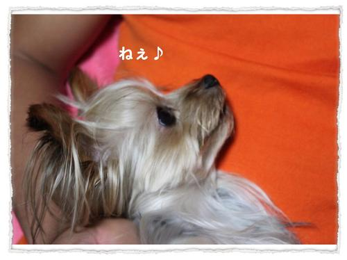 dc092014 コピー1.JPG