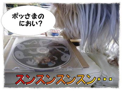 dc121101 コピー1.JPG