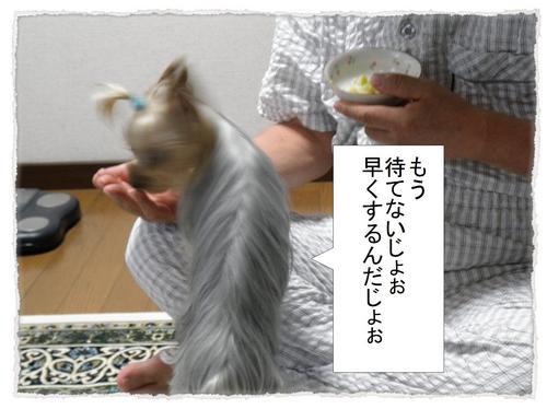 dc070709 コピー1.JPG