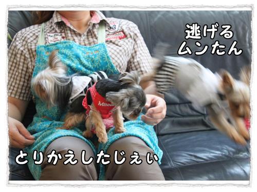 dc071817 コピー1.JPG